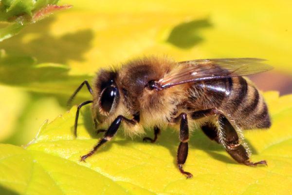 honeyminer app / honeybee